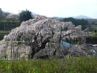 20150419三春滝桜(その47)