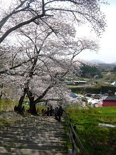20150419三春滝桜(その48)