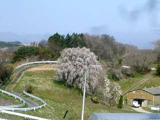 20150419三春滝桜(その53)