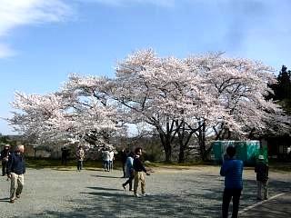 20150419三春滝桜(その54)