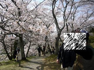 20150419三春滝桜(その55)