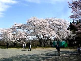 20150419三春滝桜(その57)