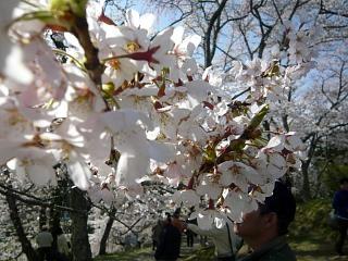 20150419三春滝桜(その58)