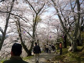20150419三春滝桜(その59)