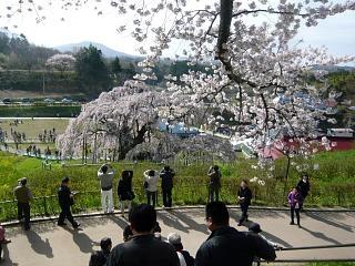 20150419三春滝桜(その60)