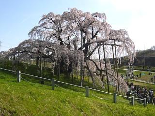 20150419三春滝桜(その63)
