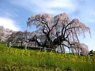 20150419三春滝桜(その64)