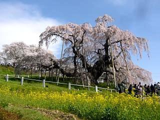 20150419三春滝桜(その65)