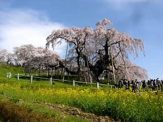 20150419三春滝桜(その66)