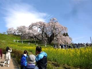 20150419三春滝桜(その67)