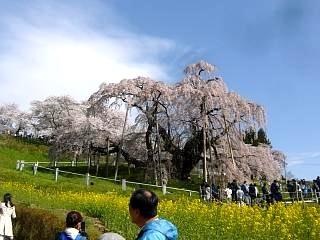 20150419三春滝桜(その68)