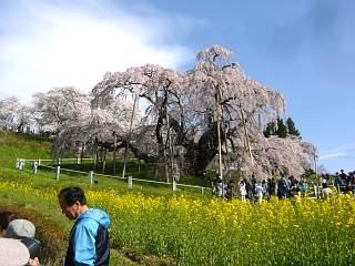 20150419三春滝桜(その69)