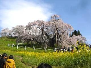 20150419三春滝桜(その70)