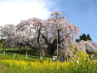 20150419三春滝桜(その71)