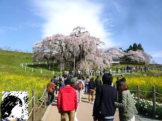 20150419三春滝桜(その73)