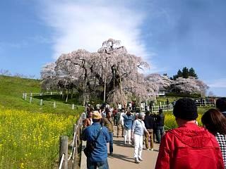 20150419三春滝桜(その74)