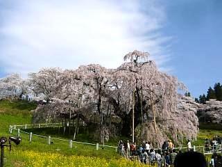 20150419三春滝桜(その76)