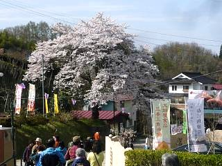 20150419三春滝桜(その79)