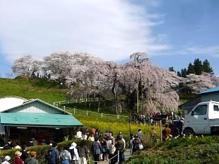 20150419三春滝桜(その80)