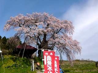20150419不動桜(その15)