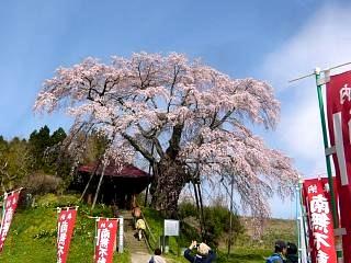20150419不動桜(その16)