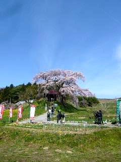 20150419不動桜(その18)