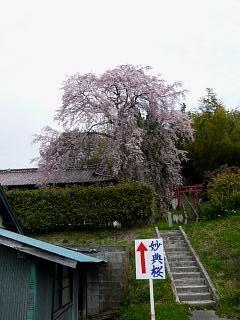 20150419妙典桜(その02)
