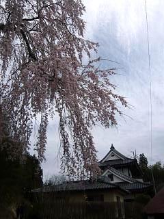20150419妙典桜(その10)