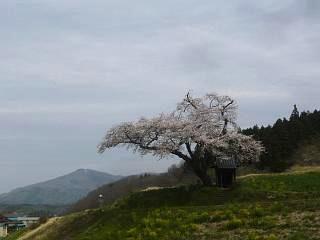 20150419小沢の桜(その9)