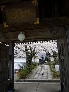 20150419福聚寺の桜(その15)
