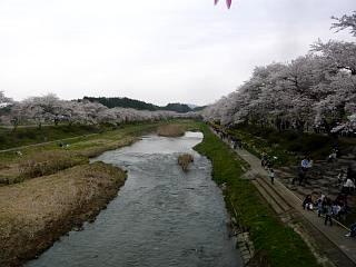 20150419夏井の千本桜1(その17)