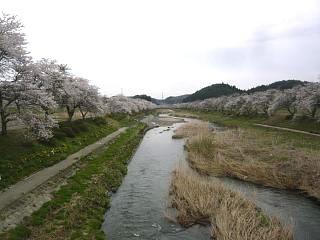 20150419夏井の千本桜1(その18)