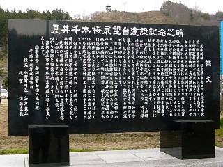 20150419夏井の千本桜1(その19)