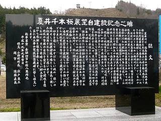 20150419夏井の千本桜1(その24)