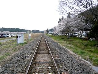 20150419夏井の千本桜1(その27)