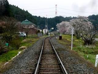 20150419夏井の千本桜1(その28)