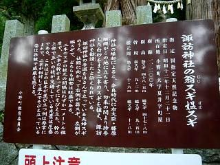 20150419夏井の千本桜1(その35)