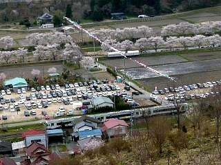 20150419夏井千本桜2(その39)