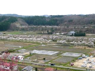 20150419夏井千本桜2(その43)