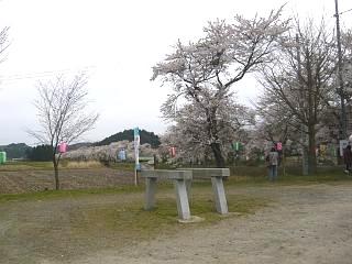 20150419夏井千本桜2(その44)