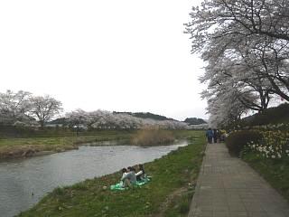 20150419夏井千本桜2(その45)