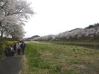 20150419夏井千本桜2(その48)