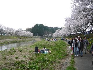 20150419夏井千本桜2(その51)