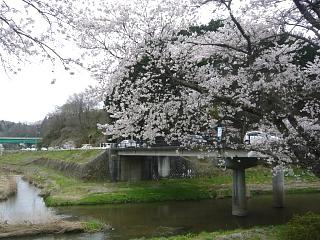20150419夏井千本桜2(その52)
