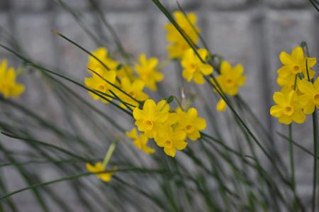 garden2016330-11.jpg