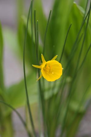 garden2016330-14.jpg
