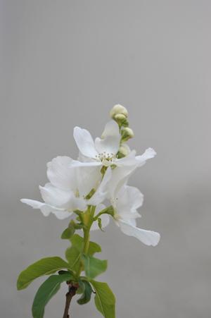 garden2016402-7.jpg