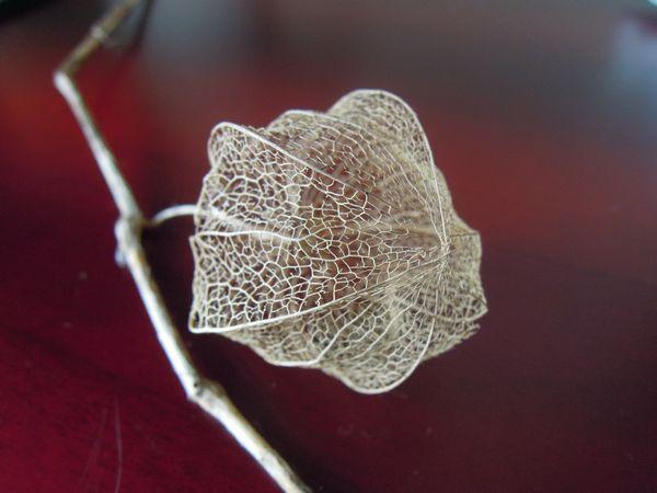 秋の花壇の落とし物