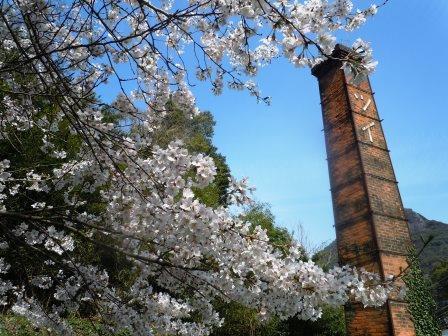 桜満開2〈2016-04-02)