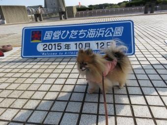 ひたち海浜公園2015 035
